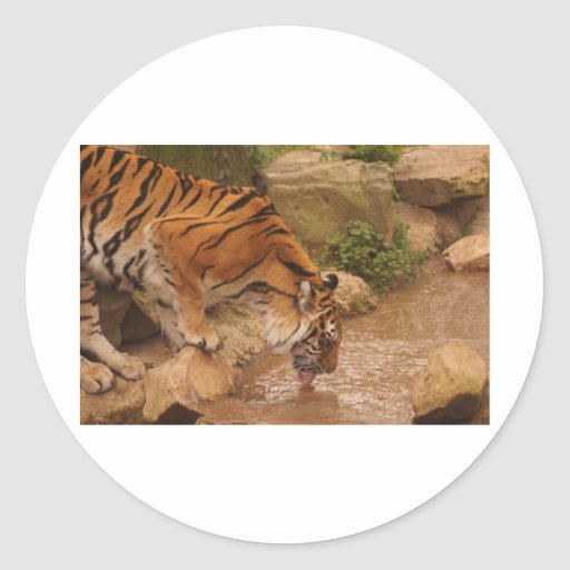 agua potable del tigre pegatina
