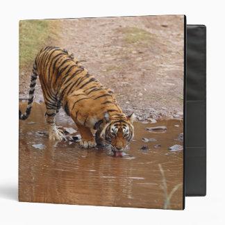 Agua potable real del tigre de Bengala en