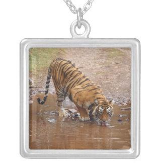 Agua potable real del tigre de Bengala en Colgante Cuadrado