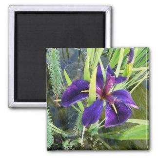 Agua púrpura/imanes negros de la flor del iris del imán cuadrado