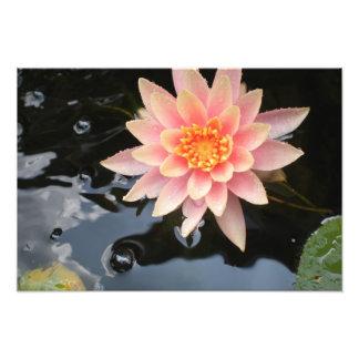Agua serena Lily~print Cojinete