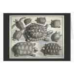 Aguafuerte de la tortuga del vintage tarjeta de felicitación