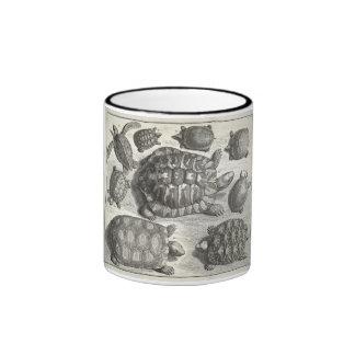 Aguafuerte de la tortuga del vintage tazas de café