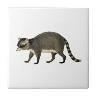Aguafuerte del mapache del vintage azulejo cuadrado pequeño
