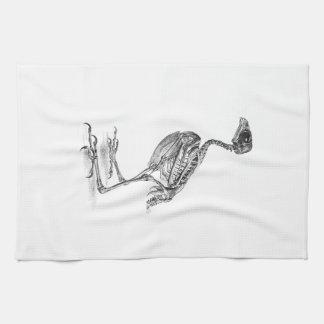 Aguafuerte esquelética del pájaro de bebé del toallas