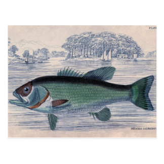 Aguafuerte marina clásica - Grystes Salmoides Tarjetas Postales