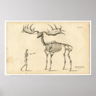 Aguafuerte zoológica clásica - alces y ser humano impresiones