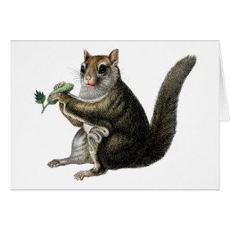 Aguafuerte zoológica clásica - ardilla de vuelo tarjeta de felicitación