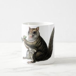 Aguafuerte zoológica clásica - ardilla de vuelo taza de café