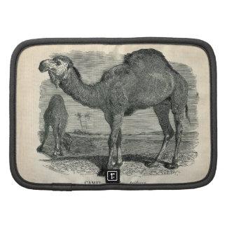 Aguafuerte zoológica clásica - camello árabe organizador