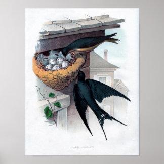 Aguafuerte zoológica clásica - trago de granero póster
