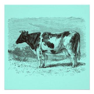 Aguamarina retra de las vacas de la vaca holandesa anuncios personalizados