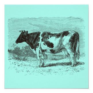 """Aguamarina retra de las vacas de la vaca holandesa invitación 5.25"""" x 5.25"""""""