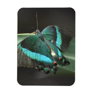 Aguamarina y mariposa negra iman flexible