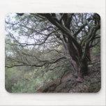 Aguas termales de Gilroy - árbol del manzanita - m Tapetes De Raton