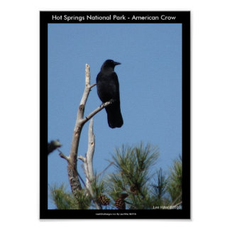 Aguas termales parque nacional, AR - cuervo americ Poster