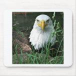 águila calva alfombrillas de ratón