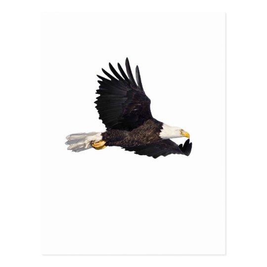 Águila calva americana postal