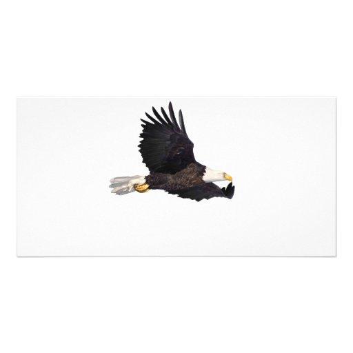 Águila calva americana tarjeta fotográfica