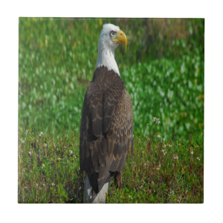 Águila calva azulejo cuadrado pequeño