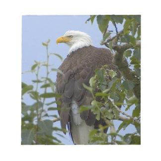Águila calva blocs de papel