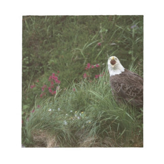 Águila calva de los E.E.U.U., Alaska, isla de Unal Libreta Para Notas