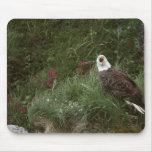 Águila calva de los E.E.U.U., Alaska, isla de Unal Alfombrilla De Raton