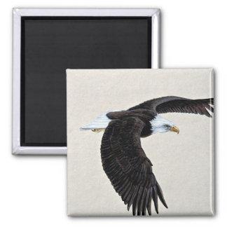 Águila calva en vuelo iman