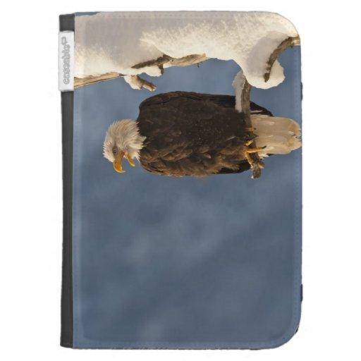 Águila calva encaramada en la rama 2