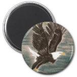 águila calva iman de nevera