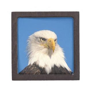 águila calva, leuccocephalus del Haliaeetus, 2 Caja De Joyas De Calidad