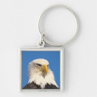 águila calva, leuccocephalus del Haliaeetus, 2 Llavero Cuadrado Plateado