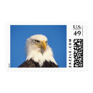 águila calva, leuccocephalus del Haliaeetus, 2 Sellos