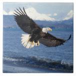 águila calva, leuccocephalus del Haliaeetus, en vu Azulejo Cuadrado Grande