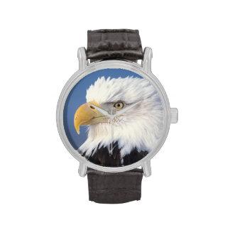 águila calva leuccocephalus del Haliaeetus Relojes