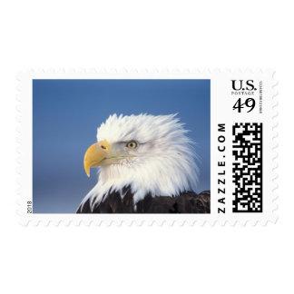 águila calva, leuccocephalus del Haliaeetus, Sello Postal