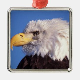 águila calva leucocephalus del Haliaeetus cierre Adornos De Navidad