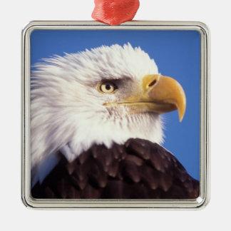 águila calva, leucocephalus del Haliaeetus, cierre Adorno Cuadrado Plateado