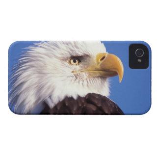águila calva, leucocephalus del Haliaeetus, cierre Case-Mate iPhone 4 Fundas