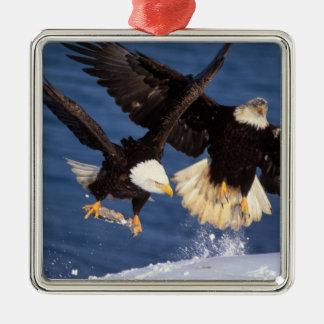 águila calva, leucocephalus del Haliaeetus, Adorno Cuadrado Plateado
