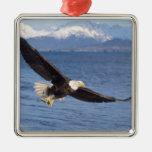 águila calva, leucocephalus del Haliaeetus, en Adorno Navideño Cuadrado De Metal