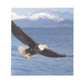 águila calva, leucocephalus del Haliaeetus, en vue Bloc De Notas