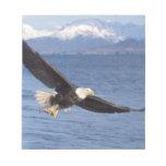 águila calva, leucocephalus del Haliaeetus, en vue Bloc De Papel