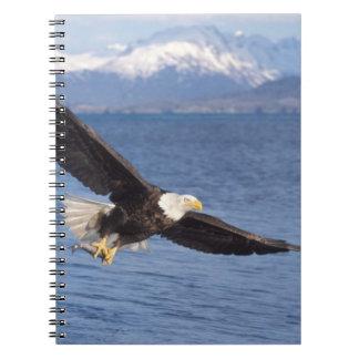 águila calva, leucocephalus del Haliaeetus, en vue Libros De Apuntes