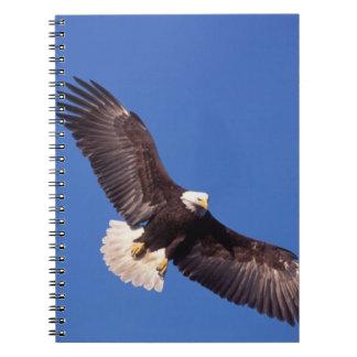 águila calva, leucocephalus del Haliaeetus, en vue Libro De Apuntes