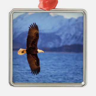águila calva leucocephalus del Haliaeetus en vue Ornamento Para Arbol De Navidad