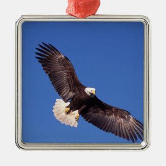 águila calva, leucocephalus del Haliaeetus, en vue Adorno De Navidad