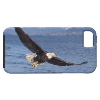 águila calva, leucocephalus del Haliaeetus, en vue iPhone 5 Cárcasa