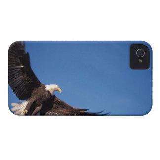águila calva, leucocephalus del Haliaeetus, en vue iPhone 4 Protectores