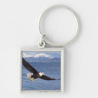 águila calva, leucocephalus del Haliaeetus, en vue Llavero Personalizado
